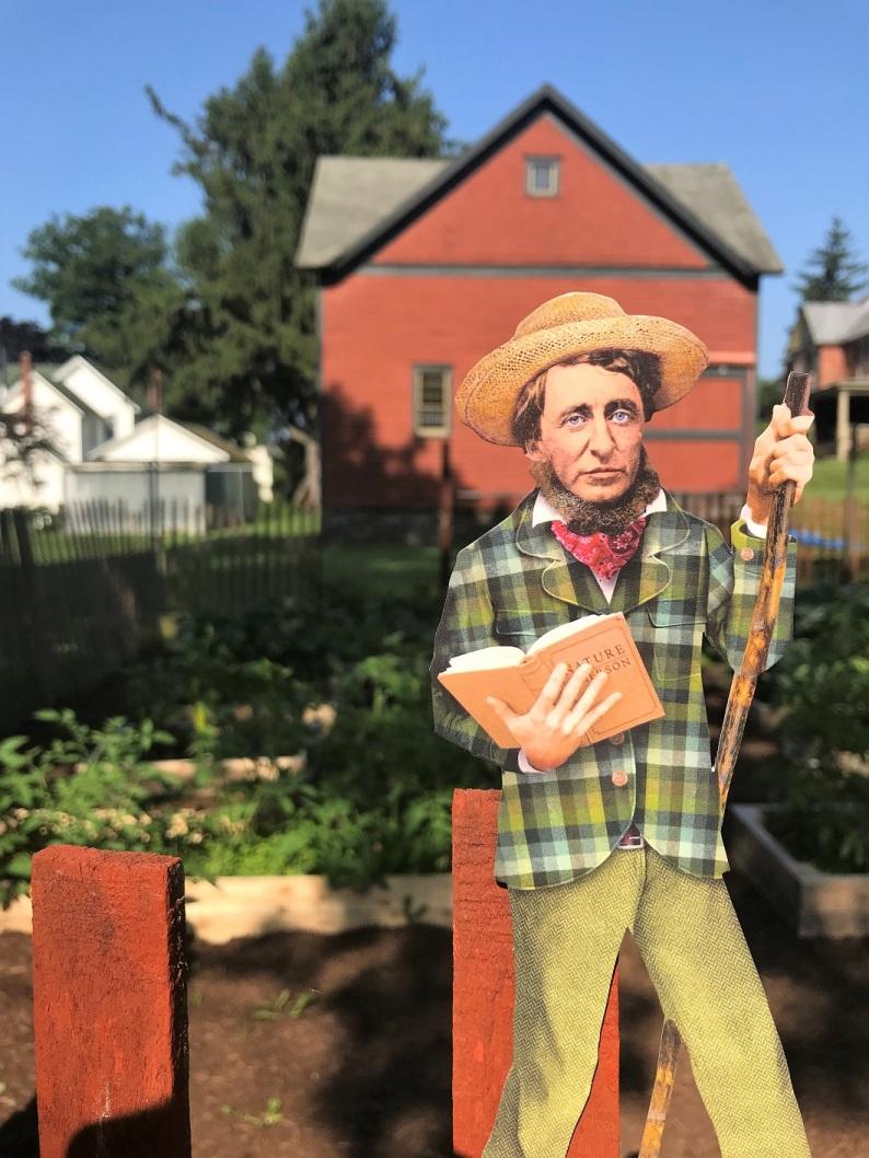 Thoreau standing in my garden